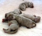 ALL 5 PUPPIES